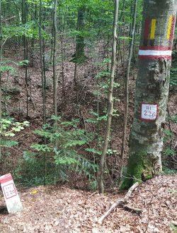 Bprne silvice pe arbori martor